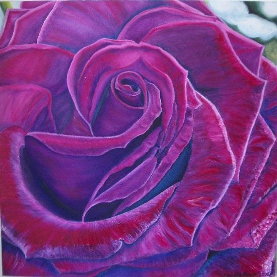 Rose_violett